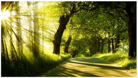 arbre soleil chemin